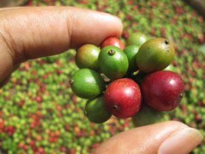 Kaffee aus Äthopien
